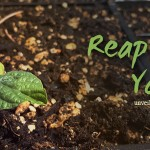 Planting Seeds For A Great Marriage